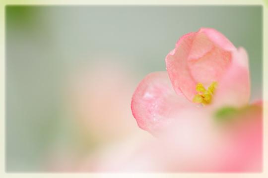 春ふわぁ~