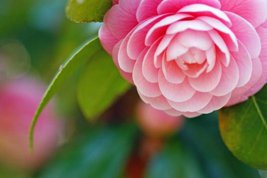 冬の花.jpg