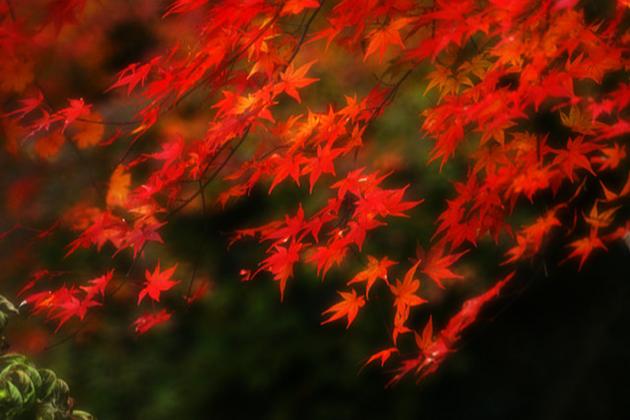 秋の風に乗って