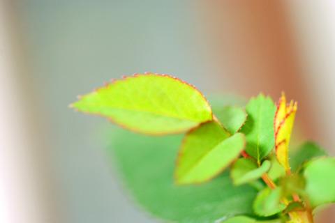 葉っぱ~♪