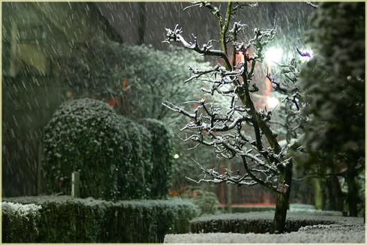 降りしきる雪
