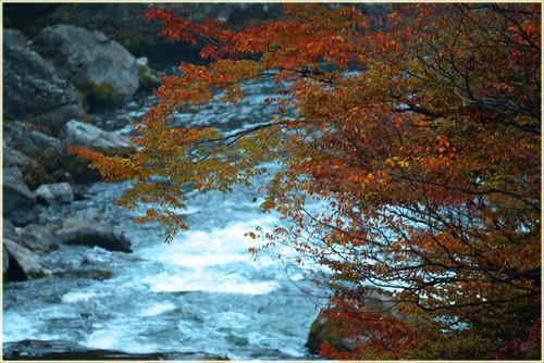 渓谷の紅葉.jpg