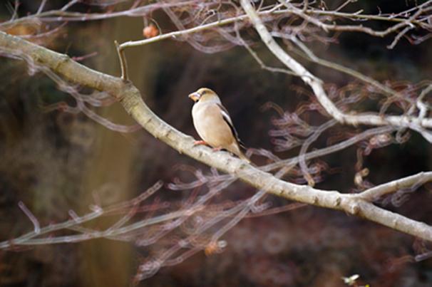 鳥13.png